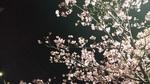 20160219-早咲き夜桜2rsz.jpg